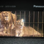 IFA 2012 – Panasonic a tutto campo