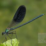 Guida alla Macrofotografia Naturalistica, seconda edizione