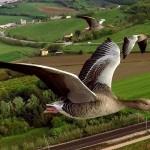 Equilibria al Montalbano Natura d'autore