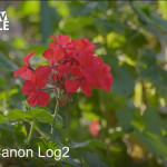Canon C200 Test Footage 4K RAW by Tutto Digitale