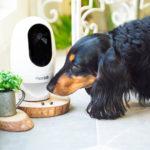 Pawbo+ è l'IP cam per chi ha animali domestici
