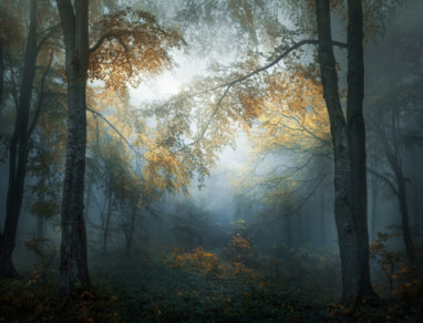 © Veselin Atanasov, Bulgaria, Open Photographer of the Year, Open, Landscape & Nature (2018 Open competition), 2018 Sony World Photography Awards