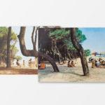 Pinus Pinea @ Andrea Carboni