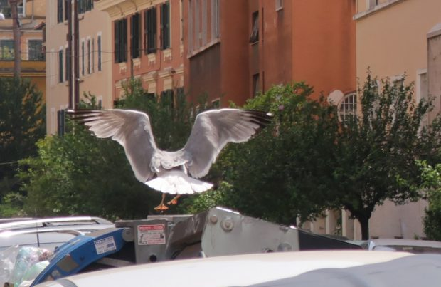 Caccia fotografica, a Roma c'est plus facile